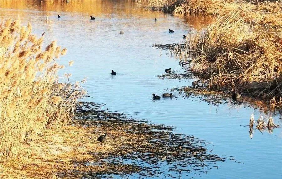 在小孩儿口湿地公园,遇见初冬海阳